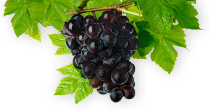 [image of grapes]